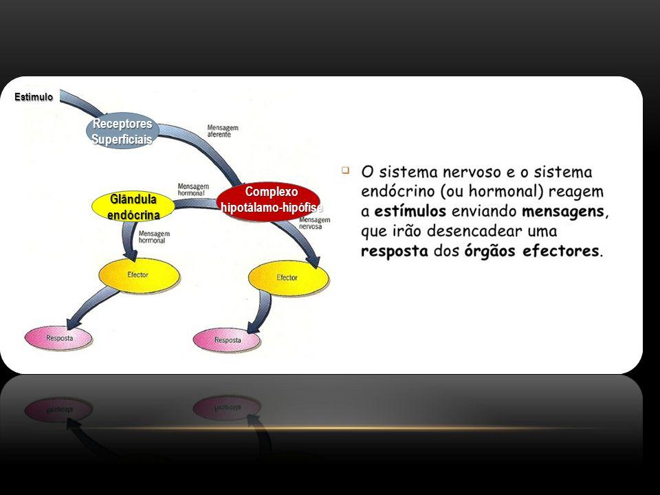 Receptores Superficiais Complexo hipotálamo-hipófise Glândula endócrina Estímulo