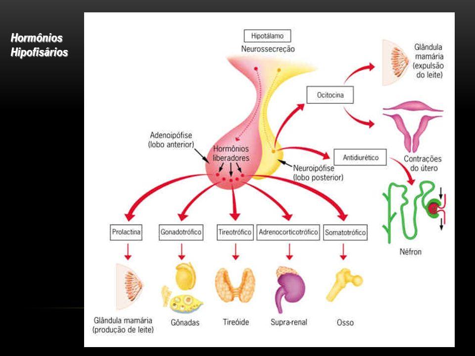 Hormônios Hipofisários