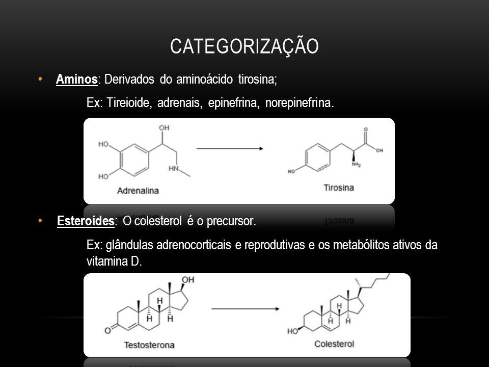 CATEGORIZAÇÃO Aminos : Derivados do aminoácido tirosina; Ex: Tireioide, adrenais, epinefrina, norepinefrina. Esteroides : O colesterol é o precursor.