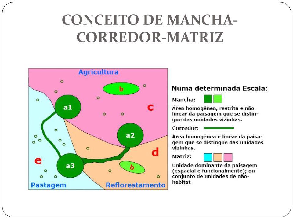 EFEITO DE BORDA Causado/intensificado pela fragmentação de ambientes Modificações na estrutura das comunidades, influenciando fatores abióticos e bióticos que regulam o sistema fragmentação