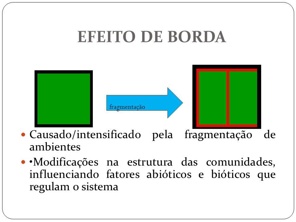 EFEITO DE BORDA Causado/intensificado pela fragmentação de ambientes Modificações na estrutura das comunidades, influenciando fatores abióticos e biót