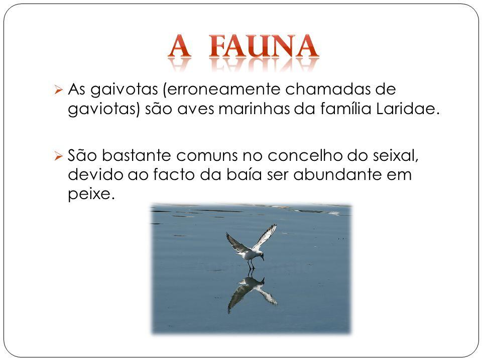 As gaivotas (erroneamente chamadas de gaviotas) são aves marinhas da família Laridae.