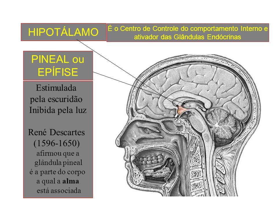 As Glândulas Endócrinas secretam os hormônios que atuam na fisiologia biológica do organismo. - HIPÓFISE - TIREÓIDE - PARATIREÓIDE - SUPRA-RENAL - PÂN