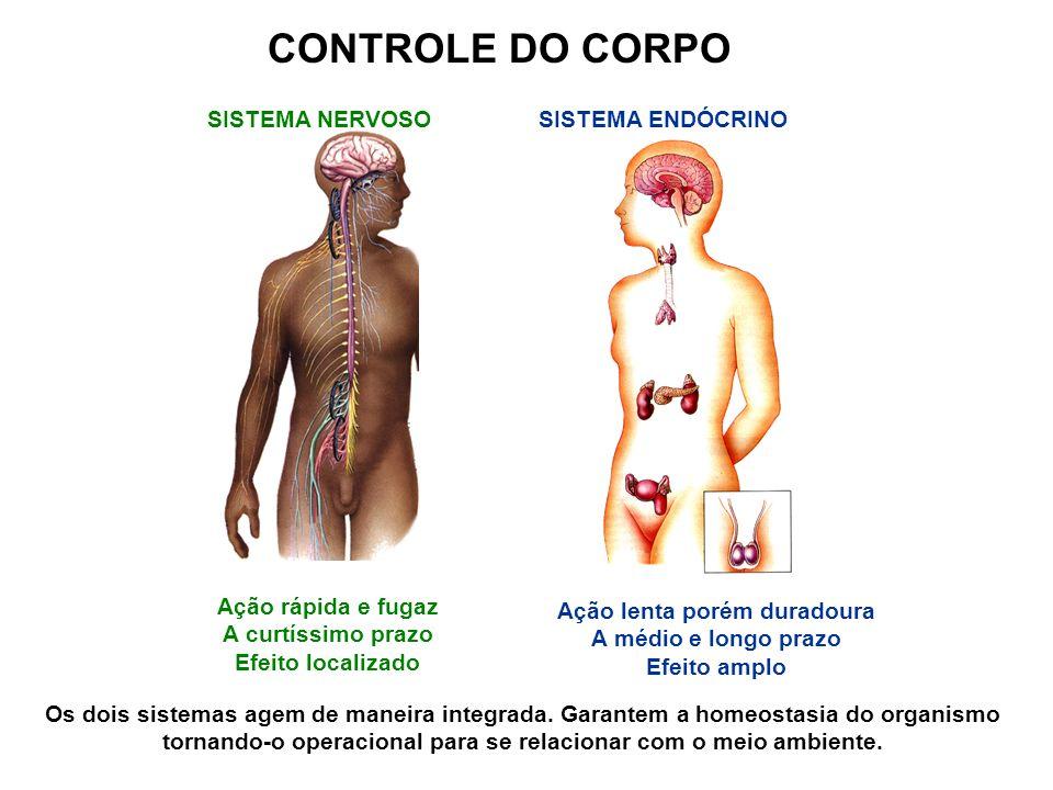 SUPRA-RENAL (Medula) - ADRENALINA Função: Regula a pressão sangüínea, estimula a quebra do glicogênio, põe o organismo em estado de alerta (prontidão) Disfunção: Taquicardia, Bradicardia, Disfunções na taxa de glicose