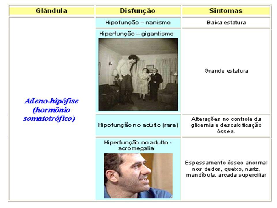Obs.: HIPOTÁLAMO Estimula a hipófise a liberar os hormônios gonadotróficos (FSH e LH) Produz fatores de liberação que atuam sobre a adeno-hipófise, es