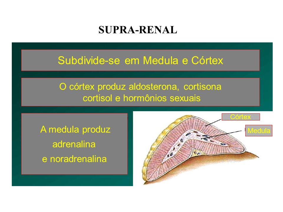 ADRENAIS OU SUPRA- RENAIS Localização: –Duas glândulas localizadas sobre os rins Partes: –Medula –Córtex
