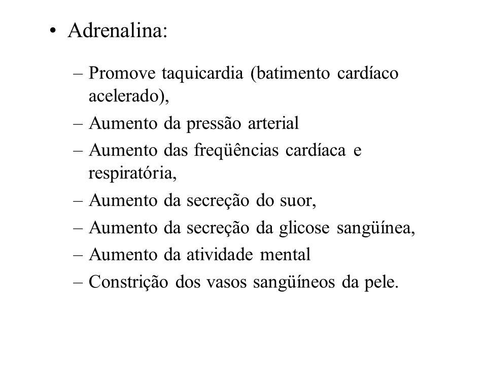 SUPRA-RENAL (Medula) - ADRENALINA Função: Regula a pressão sangüínea, estimula a quebra do glicogênio, põe o organismo em estado de alerta (prontidão)