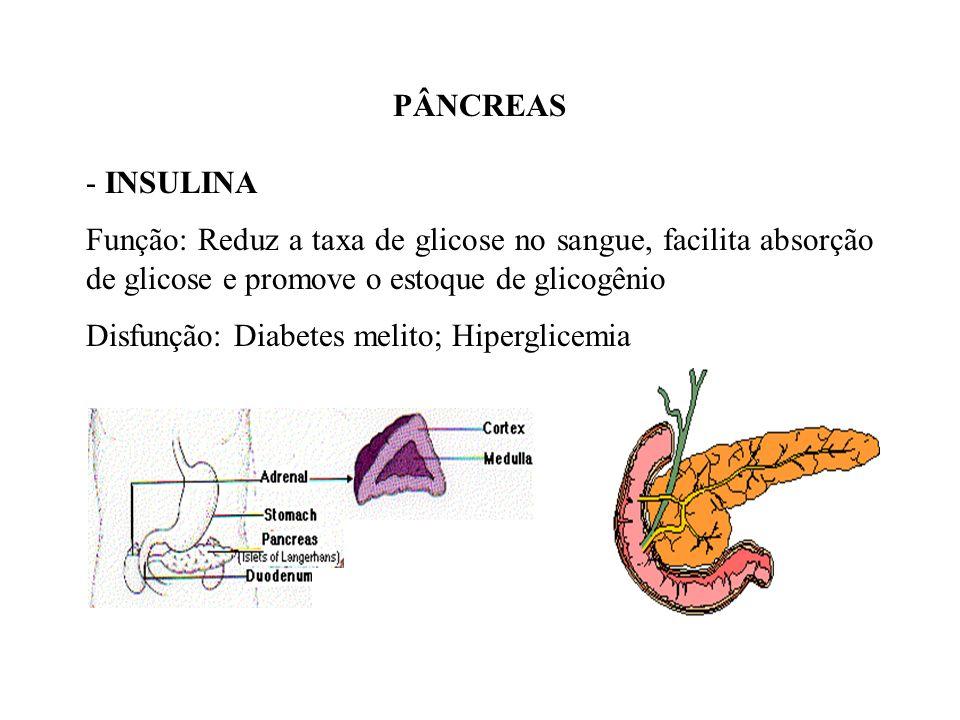Glucagon: –Ativa a enzima fosforilase, que fraciona as moléculas de glicogênio do fígado em moléculas de glicose, que passam para o sangue. Conclusão: