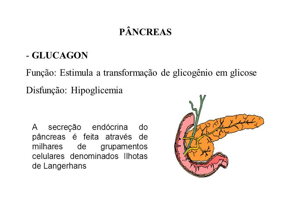 PÂNCREAS - INSULINA Função: Reduz a taxa de glicose no sangue, facilita absorção de glicose e promove o estoque de glicogênio Disfunção: Diabetes meli