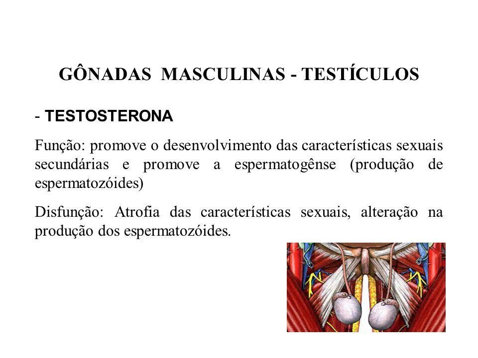 GÔNADAS FEMININAS – OVÁRIOS - ESTROGÊNIO Função: promove desenvolvimento das características sexuais secundárias femininas e regulagem do ciclo menstr