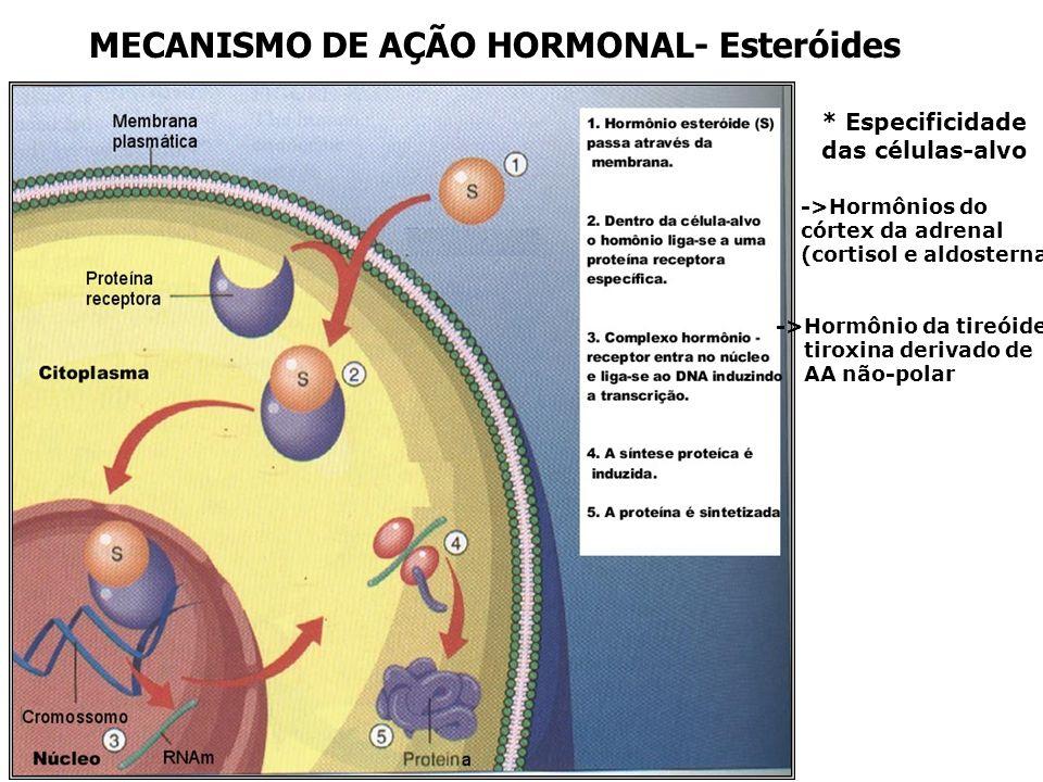 MECANISMO DE AÇÃO HORMONAL- Esteróides * Especificidade das células-alvo ->Hormônios do córtex da adrenal (cortisol e aldosterna ->Hormônio da tireóide tiroxina derivado de AA não-polar