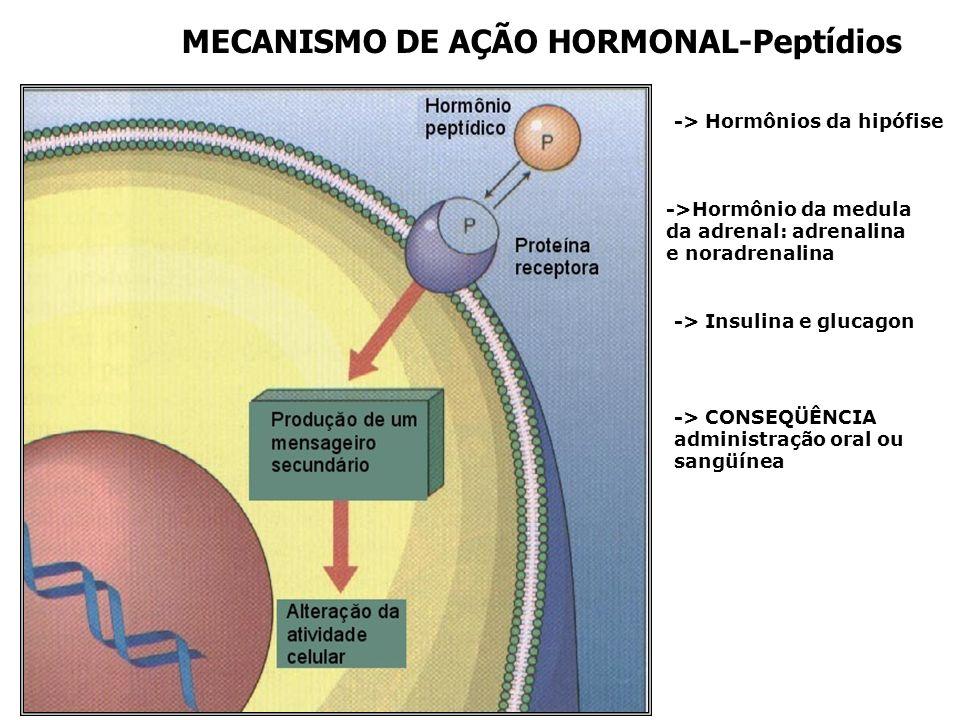 MECANISMO DE AÇÃO HORMONAL-Peptídios -> Hormônios da hipófise ->Hormônio da medula da adrenal: adrenalina e noradrenalina -> Insulina e glucagon -> CONSEQÜÊNCIA administração oral ou sangüínea