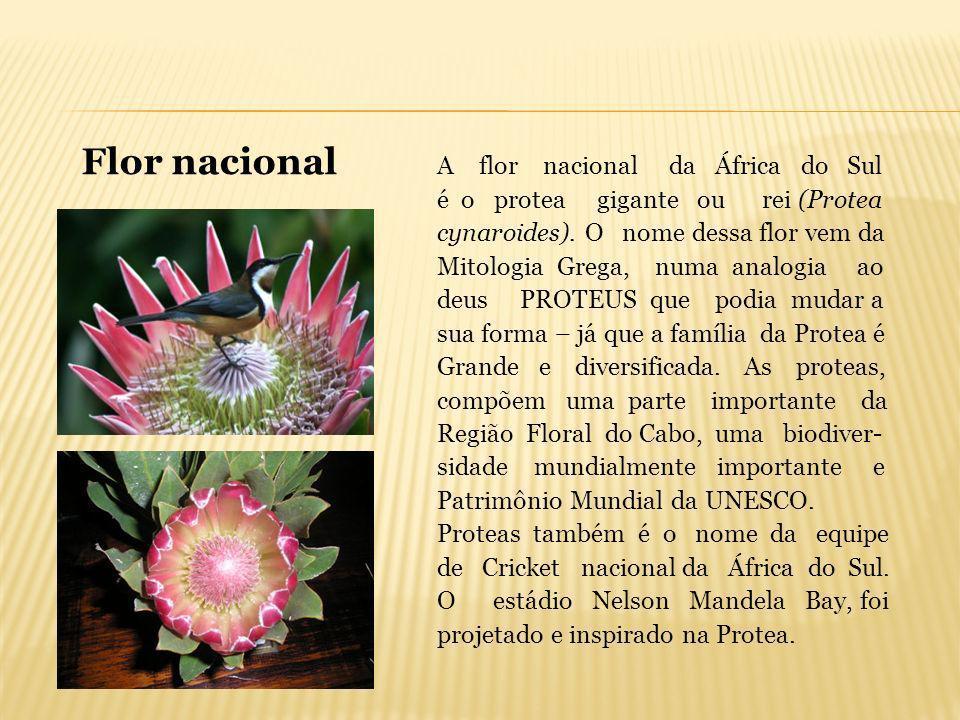 A flor nacional da África do Sul é o protea gigante ou rei (Protea cynaroides). O nome dessa flor vem da Mitologia Grega, numa analogia ao deus PROTEU