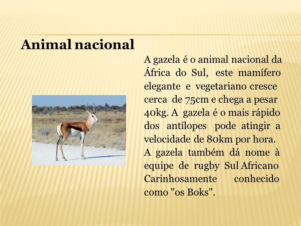 A gazela é o animal nacional da África do Sul, este mamífero elegante e vegetariano cresce cerca de 75cm e chega a pesar 40kg. A gazela é o mais rápid