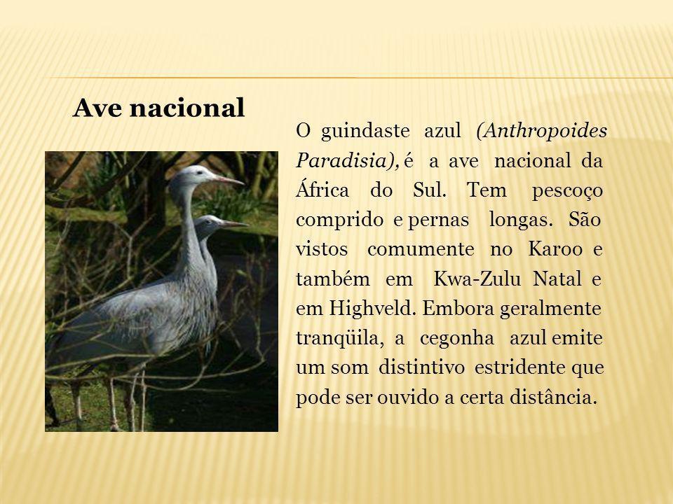O guindaste azul (Anthropoides Paradisia), é a ave nacional da África do Sul. Tem pescoço comprido e pernas longas. São vistos comumente no Karoo e ta