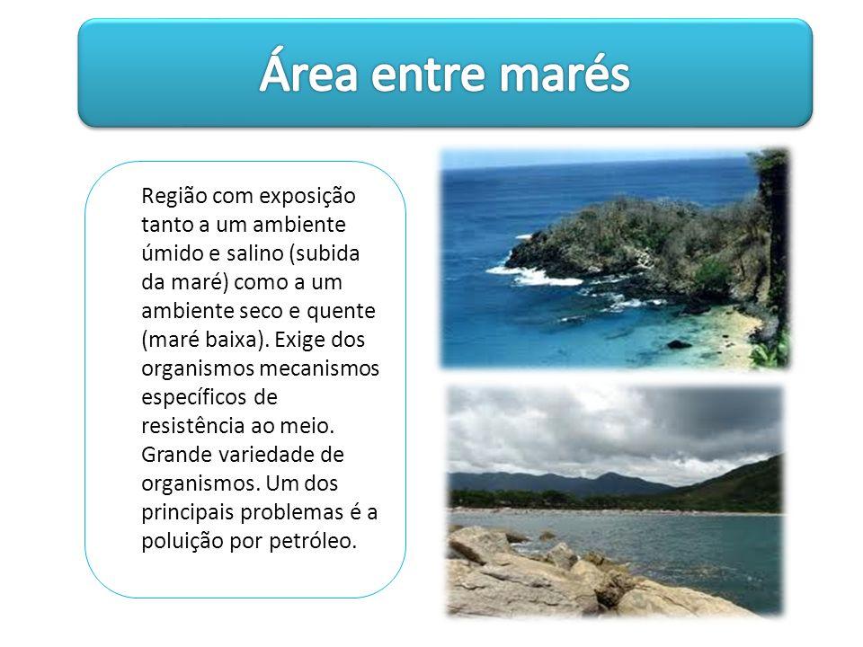 Região com exposição tanto a um ambiente úmido e salino (subida da maré) como a um ambiente seco e quente (maré baixa). Exige dos organismos mecanismo