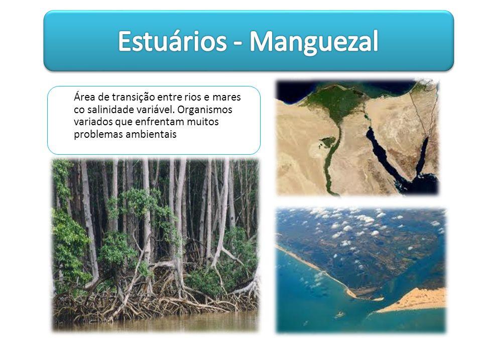 Área de transição entre rios e mares co salinidade variável. Organismos variados que enfrentam muitos problemas ambientais
