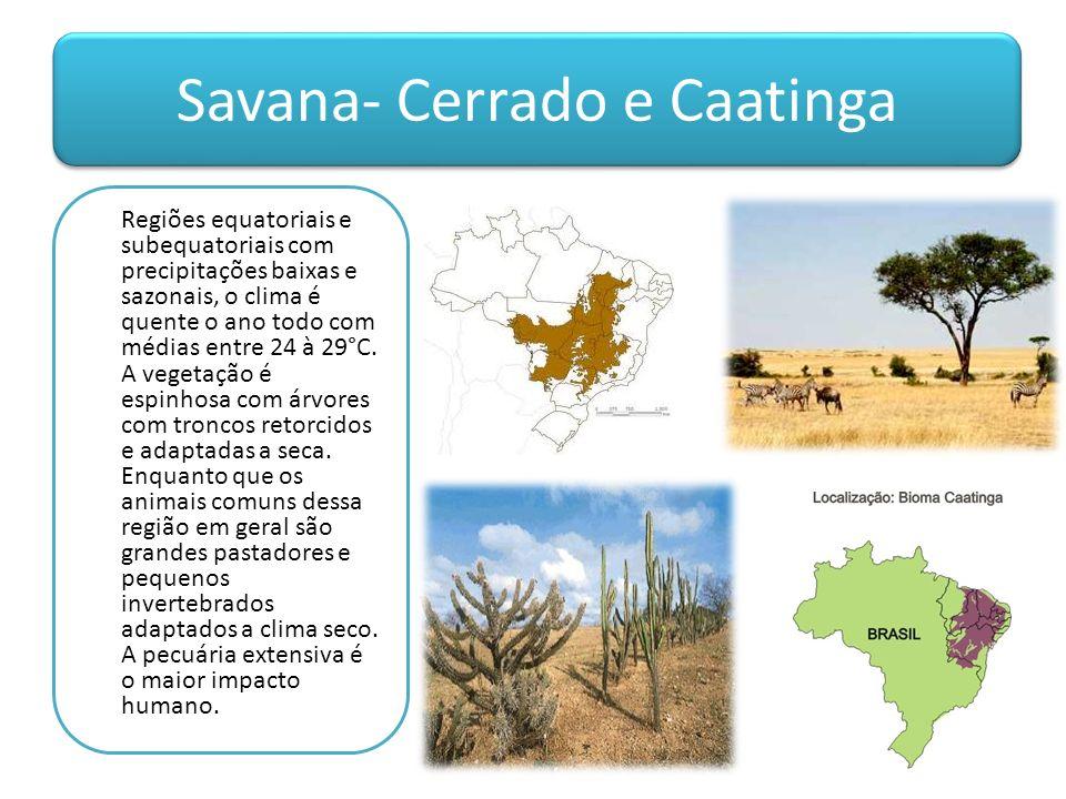 Savana- Cerrado e Caatinga Regiões equatoriais e subequatoriais com precipitações baixas e sazonais, o clima é quente o ano todo com médias entre 24 à 29°C.