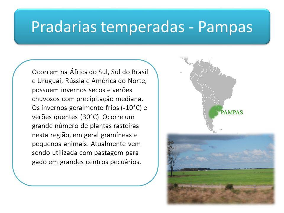 Pradarias temperadas - Pampas Ocorrem na África do Sul, Sul do Brasil e Uruguai, Rússia e América do Norte, possuem invernos secos e verões chuvosos com precipitação mediana.