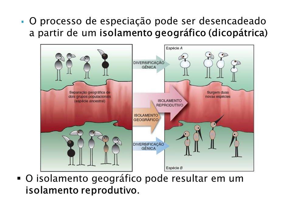 O processo de especiação pode ser desencadeado a partir de um isolamento geográfico (dicopátrica) O isolamento geográfico pode resultar em um isolamento reprodutivo.