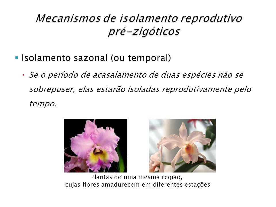 Isolamento sazonal (ou temporal) Se o período de acasalamento de duas espécies não se sobrepuser, elas estarão isoladas reprodutivamente pelo tempo.
