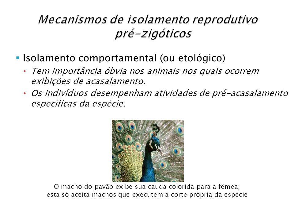 Isolamento comportamental (ou etológico) Tem importância óbvia nos animais nos quais ocorrem exibições de acasalamento. Os indivíduos desempenham ativ