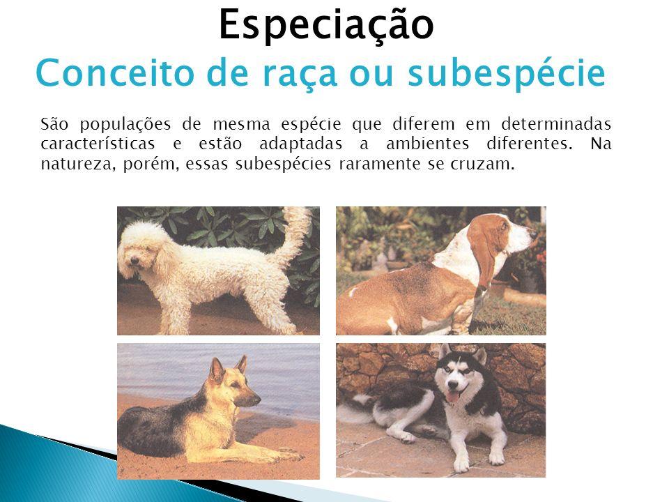 Especiação Conceito de raça ou subespécie São populações de mesma espécie que diferem em determinadas características e estão adaptadas a ambientes di
