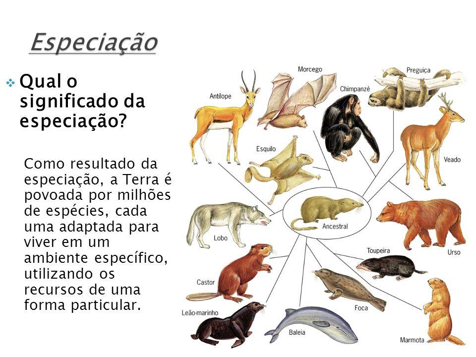 Qual o significado da especiação? Como resultado da especiação, a Terra é povoada por milhões de espécies, cada uma adaptada para viver em um ambiente