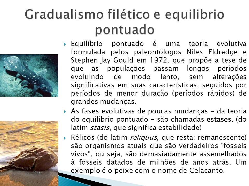 Equilíbrio pontuado é uma teoria evolutiva formulada pelos paleontólogos Niles Eldredge e Stephen Jay Gould em 1972, que propõe a tese de que as populações passam longos períodos evoluindo de modo lento, sem alterações significativas em suas características, seguidos por períodos de menor duração (períodos rápidos) de grandes mudanças.