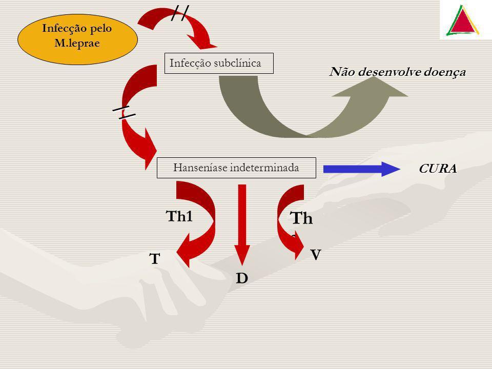 Infecção pelo M.leprae Infecção subclínica Não desenvolve doença Hanseníase indeterminada CURA T D V Th1 Th 2 // //