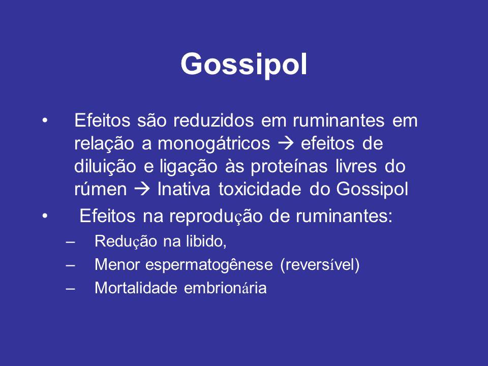 Gossipol Efeitos são reduzidos em ruminantes em relação a monogátricos efeitos de diluição e ligação às proteínas livres do rúmen Inativa toxicidade d