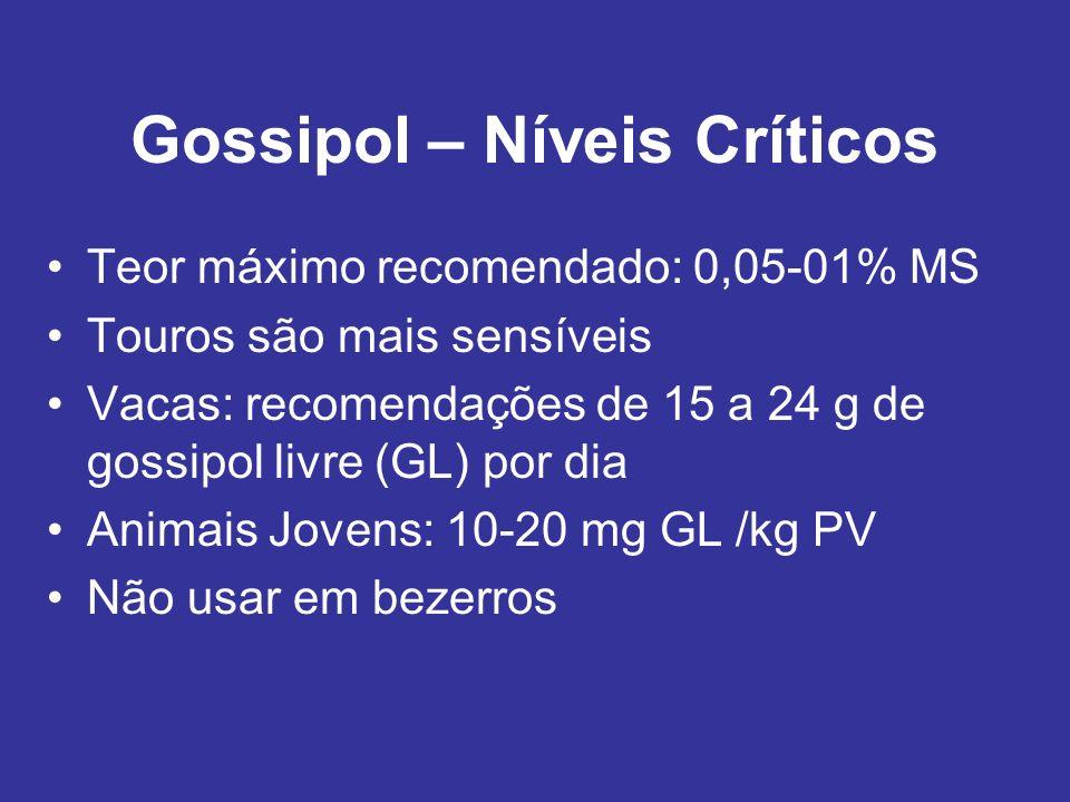 Gossipol – Níveis Críticos Teor máximo recomendado: 0,05-01% MS Touros são mais sensíveis Vacas: recomendações de 15 a 24 g de gossipol livre (GL) por