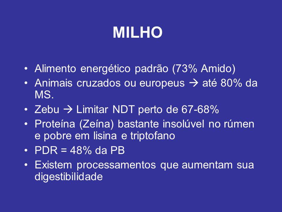 MILHO Alimento energético padrão (73% Amido) Animais cruzados ou europeus até 80% da MS. Zebu Limitar NDT perto de 67-68% Proteína (Zeína) bastante in