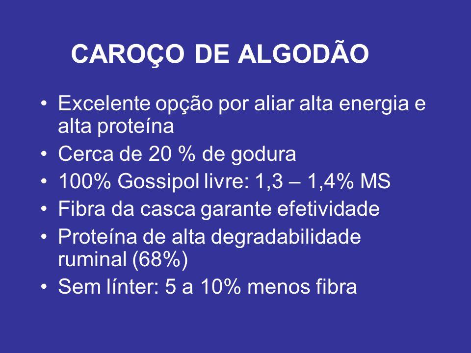 CAROÇO DE ALGODÃO Excelente opção por aliar alta energia e alta proteína Cerca de 20 % de godura 100% Gossipol livre: 1,3 – 1,4% MS Fibra da casca gar