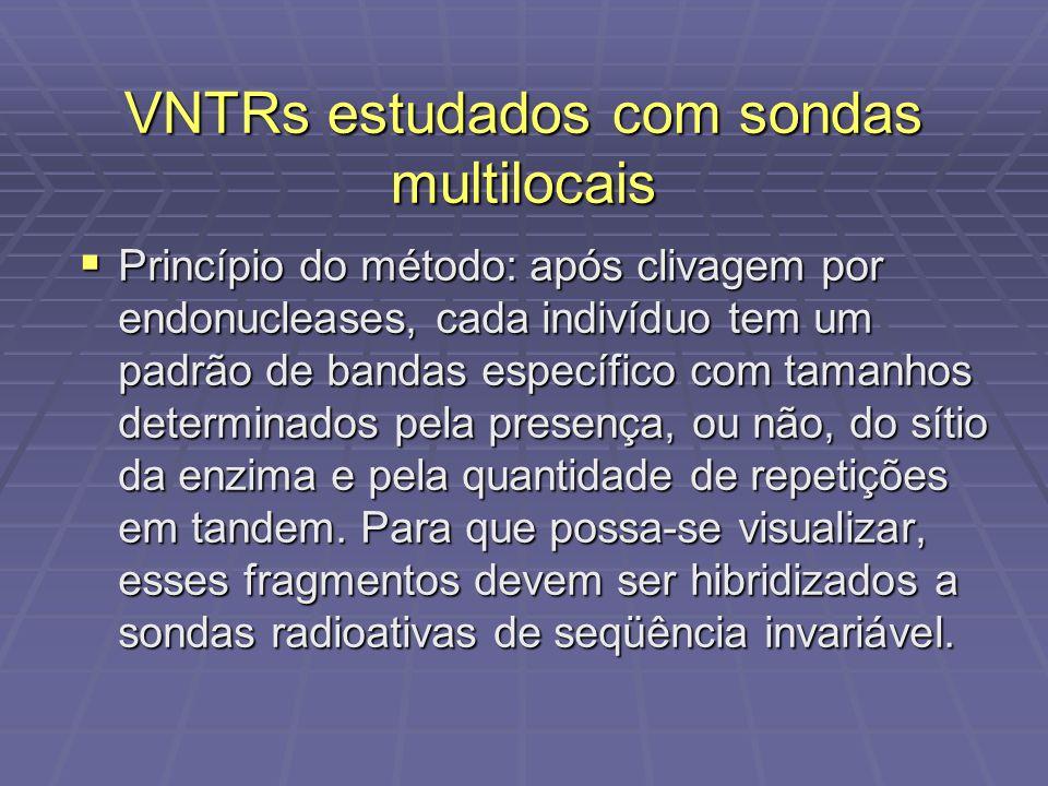 VNTRs estudados com sondas multilocais Princípio do método: após clivagem por endonucleases, cada indivíduo tem um padrão de bandas específico com tam