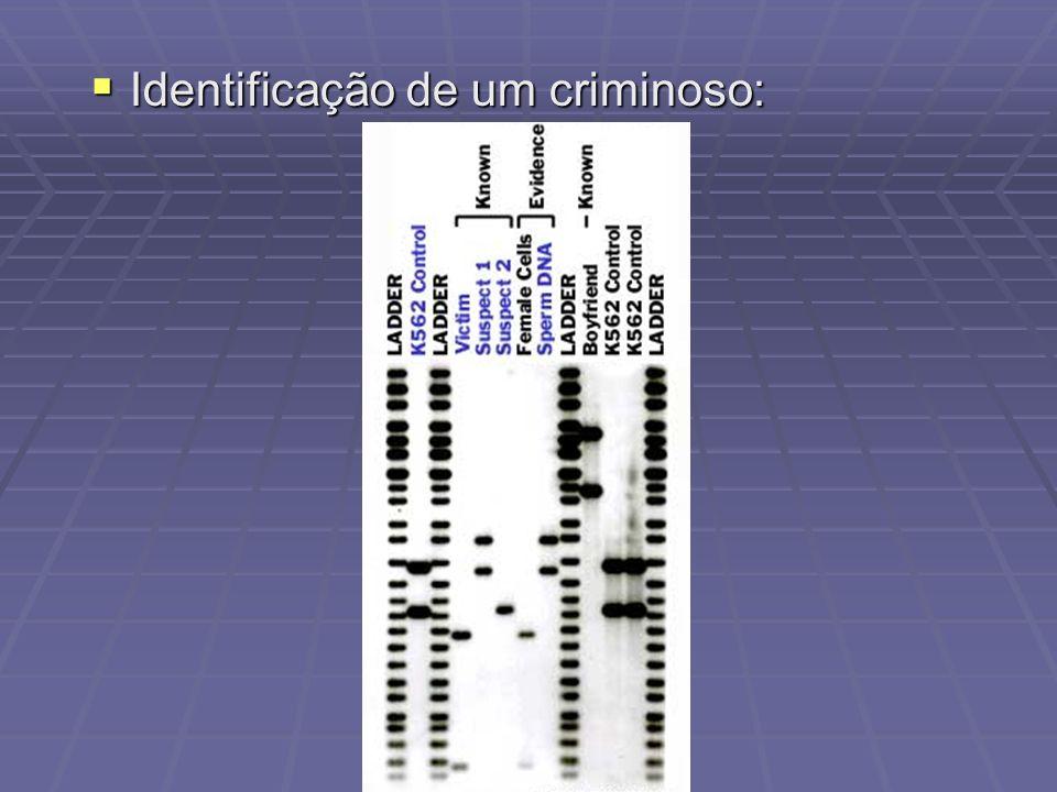 Identificação de um criminoso: Identificação de um criminoso: