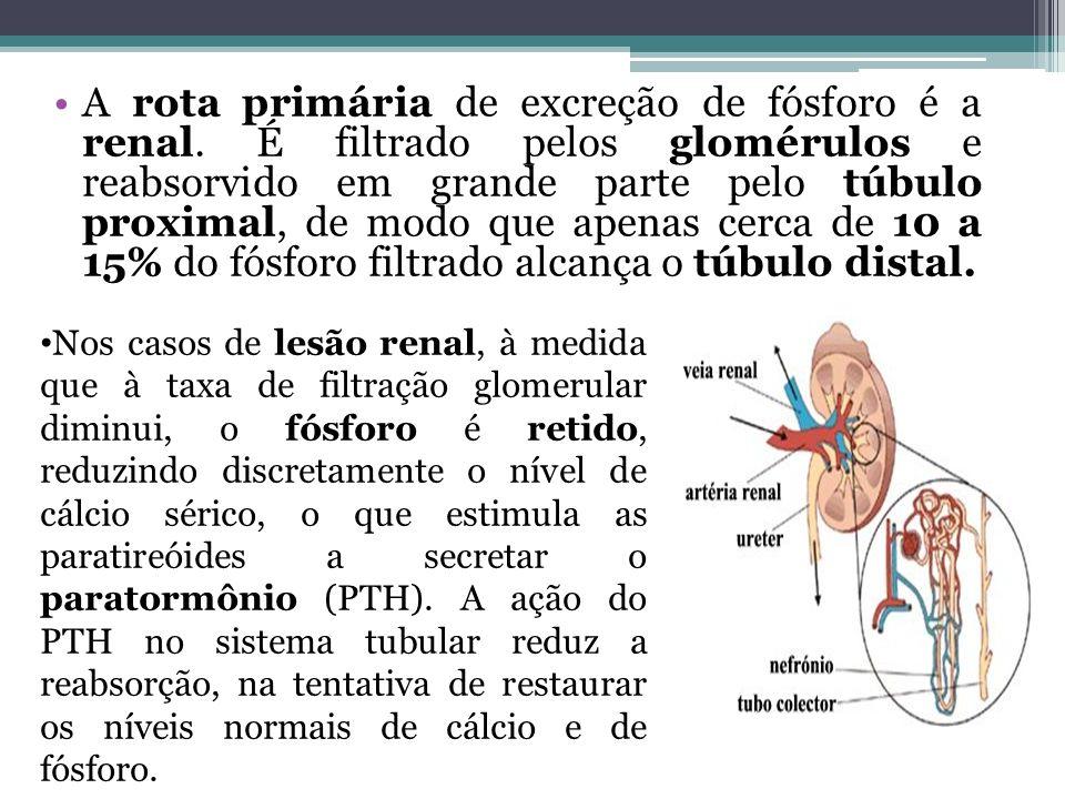A rota primária de excreção de fósforo é a renal. É filtrado pelos glomérulos e reabsorvido em grande parte pelo túbulo proximal, de modo que apenas c