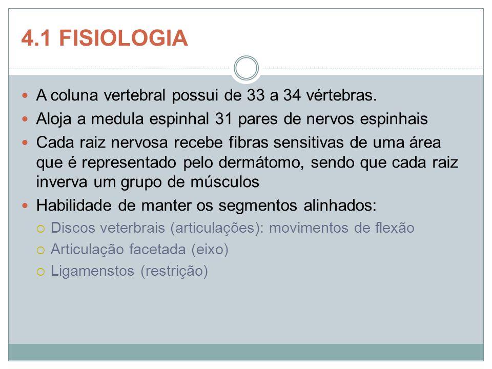 4.1 FISIOLOGIA A coluna vertebral possui de 33 a 34 vértebras. Aloja a medula espinhal 31 pares de nervos espinhais Cada raiz nervosa recebe fibras se