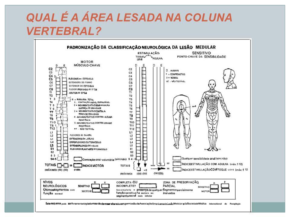 REFERÊNCIAS BIBLIOGRÁFICAS DEFINO, H.LA.Trauma Raquimedular.