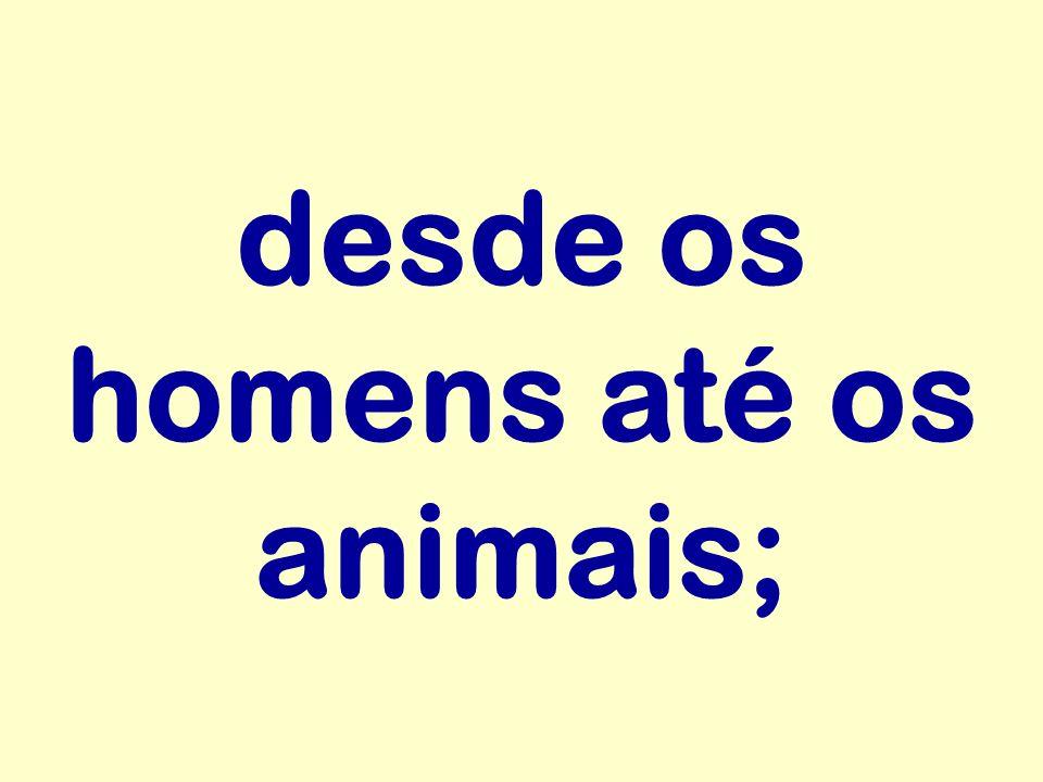 desde os homens até os animais;