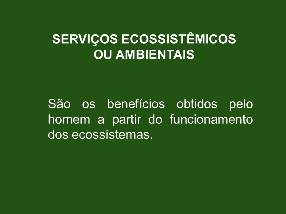 SERVIÇOS ECOSSISTÊMICOS OU AMBIENTAIS São os benefícios obtidos pelo homem a partir do funcionamento dos ecossistemas.