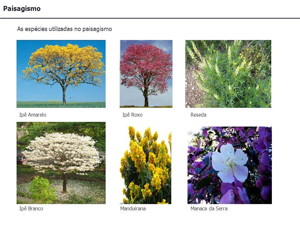Paisagismo As espécies utilizadas no paisagismo Ipê Amarelo Ipê Branco Ipê Roxo Manduirana Reseda Manaca da Serra