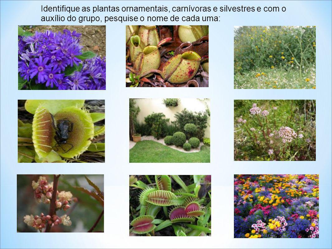 Identifique as plantas ornamentais, carnívoras e silvestres e com o auxílio do grupo, pesquise o nome de cada uma: