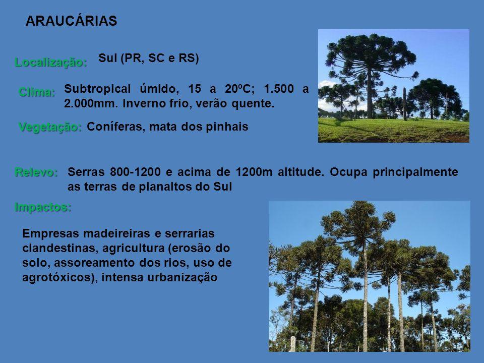 ARAUCÁRIAS Localização: Clima: Vegetação: Relevo: Impactos: Sul (PR, SC e RS) Serras 800-1200 e acima de 1200m altitude. Ocupa principalmente as terra