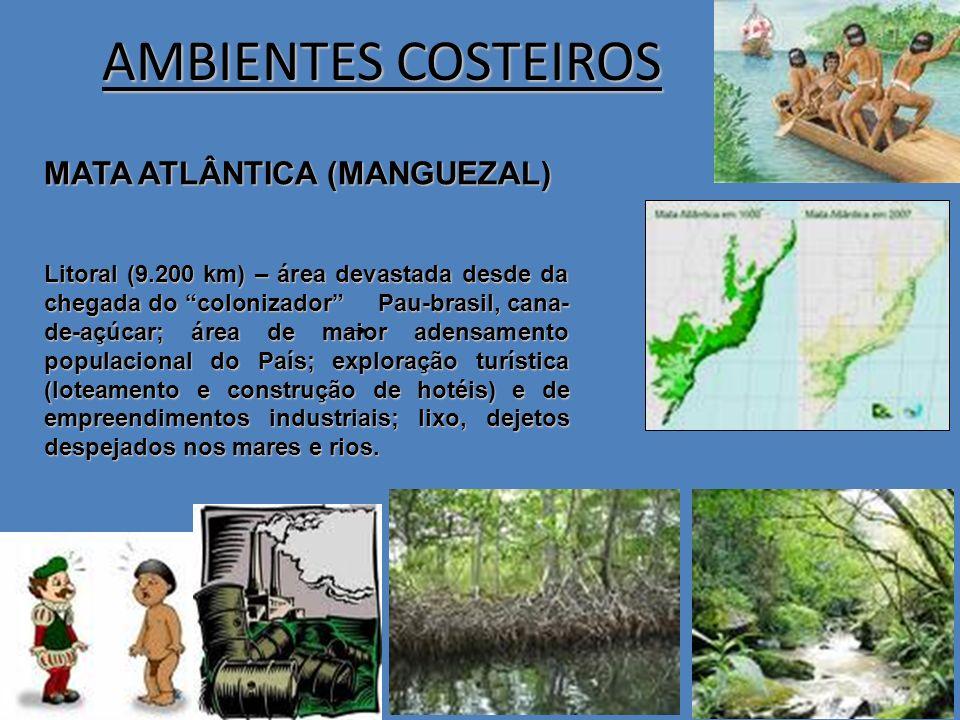 AMBIENTES COSTEIROS MATA ATLÂNTICA (MANGUEZAL) Litoral (9.200 km) – área devastada desde da chegada do colonizador Pau-brasil, cana- de-açúcar; área d