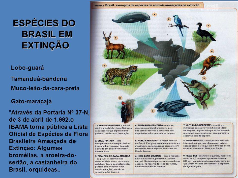 ESPÉCIES DO BRASIL EM EXTINÇÃO Lobo-guará Tamanduá-bandeira Muco-leão-da-cara-preta Gato-maracajá