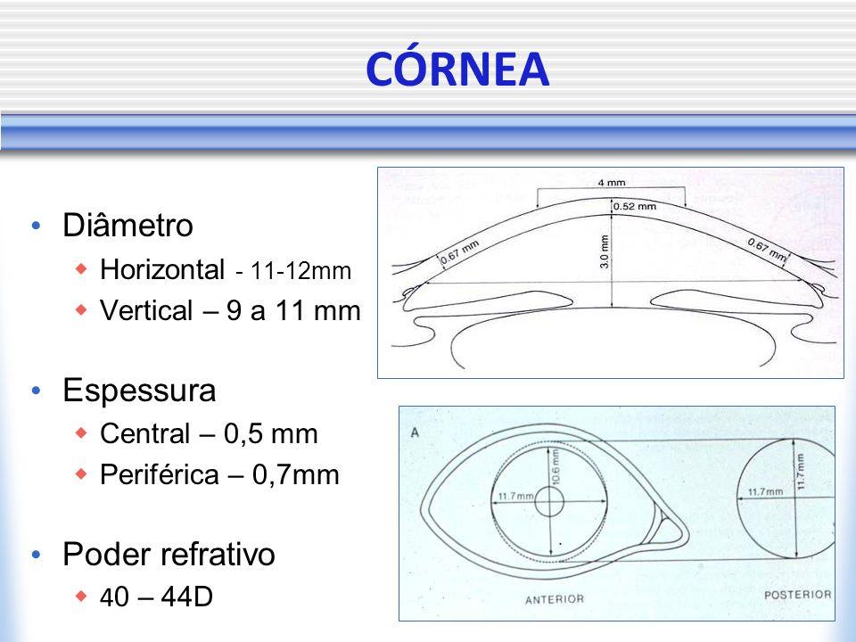 CÓRNEA Diâmetro Horizontal - 11-12mm Vertical – 9 a 11 mm Espessura Central – 0,5 mm Periférica – 0,7mm Poder refrativo 4 0 – 44D