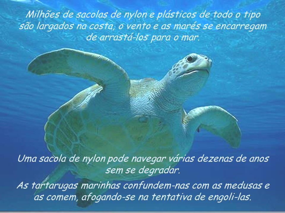 As tartarugas marinhas confundem-nas com as medusas e as comem, afogando-se na tentativa de engoli-las.