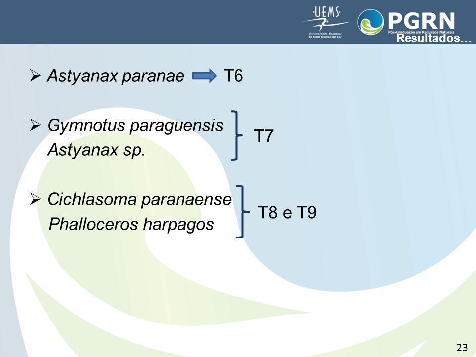 Astyanax paranae T6 Gymnotus paraguensis Astyanax sp. Cichlasoma paranaense Phalloceros harpagos 23 T7 T8 e T9 Resultados…