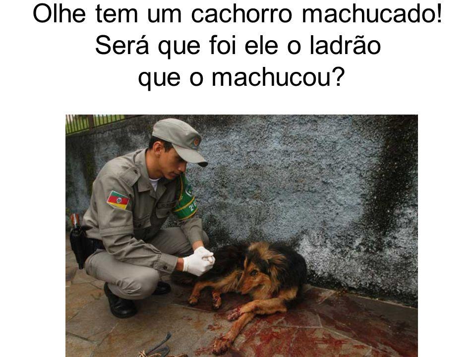 Olhe tem um cachorro machucado! Será que foi ele o ladrão que o machucou?